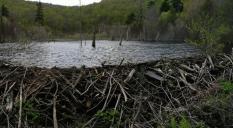 Старая плотина выдр